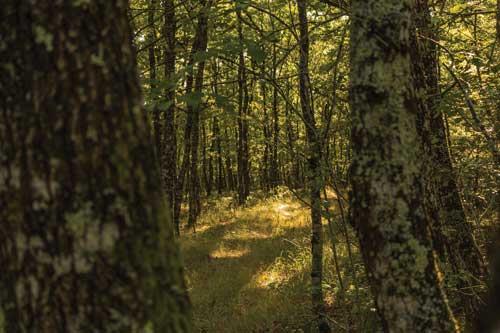 tarn sentier de la forêt de Sérénac